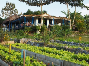 Our friendly local organic Farm in Viñales where we have lunch